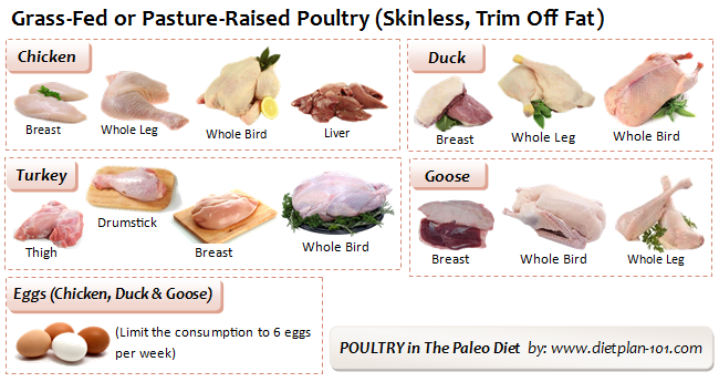Types of poultry everything you need to know about it.